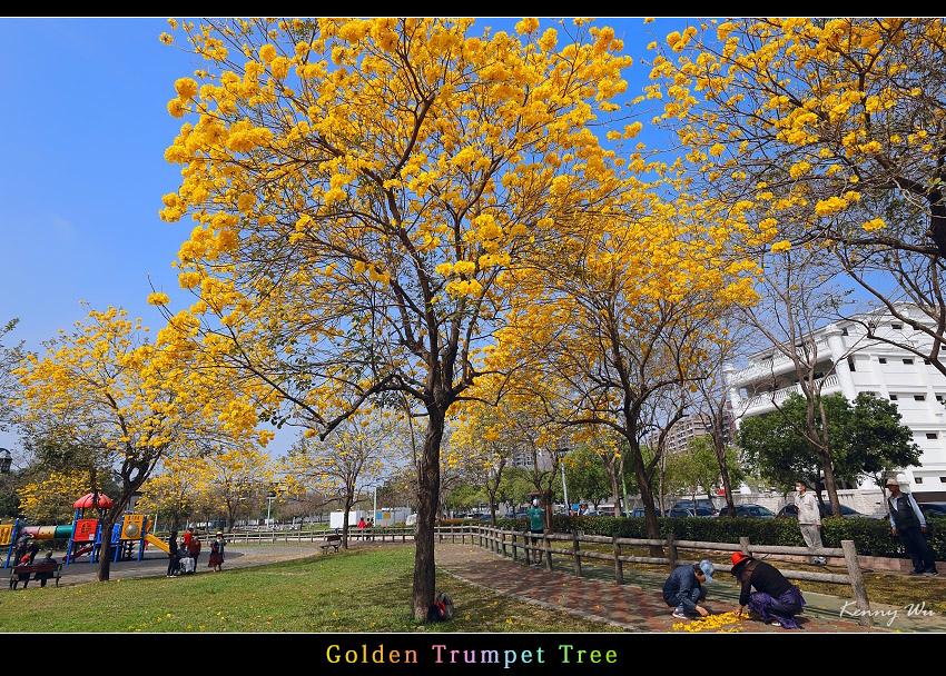 goldtr42.jpg