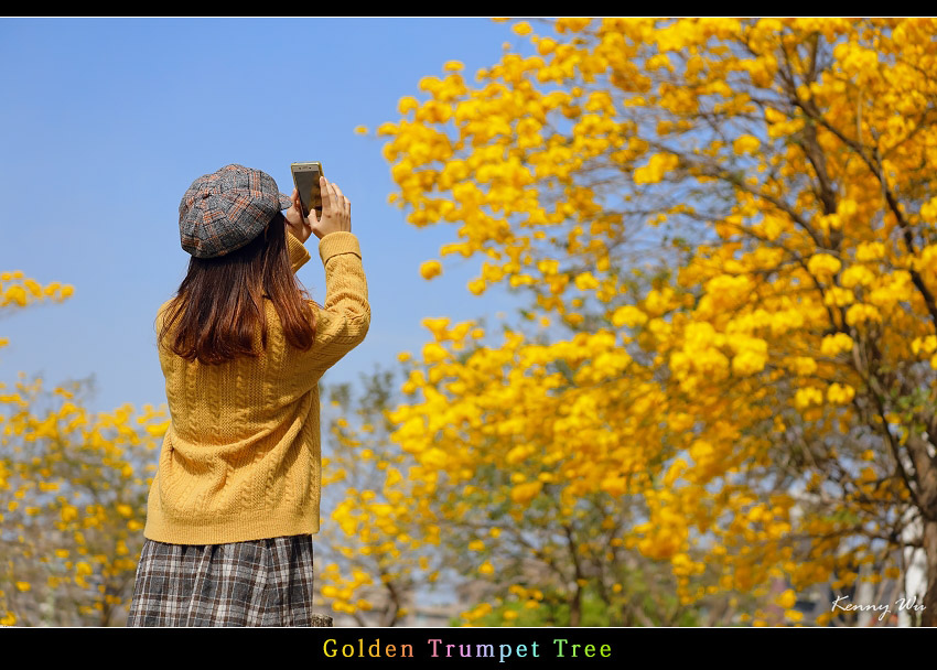 goldtr45.jpg