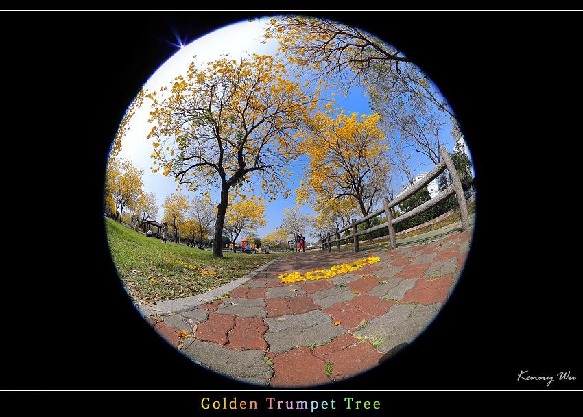 goldtr55.jpg