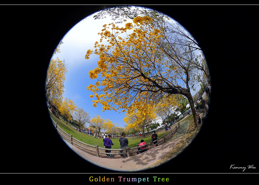 goldtr50.jpg