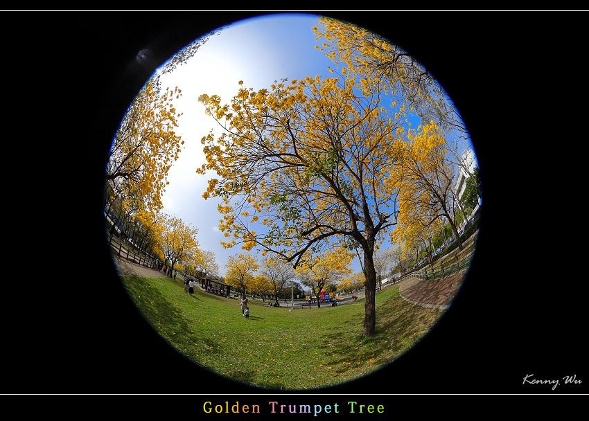 goldtr54.jpg