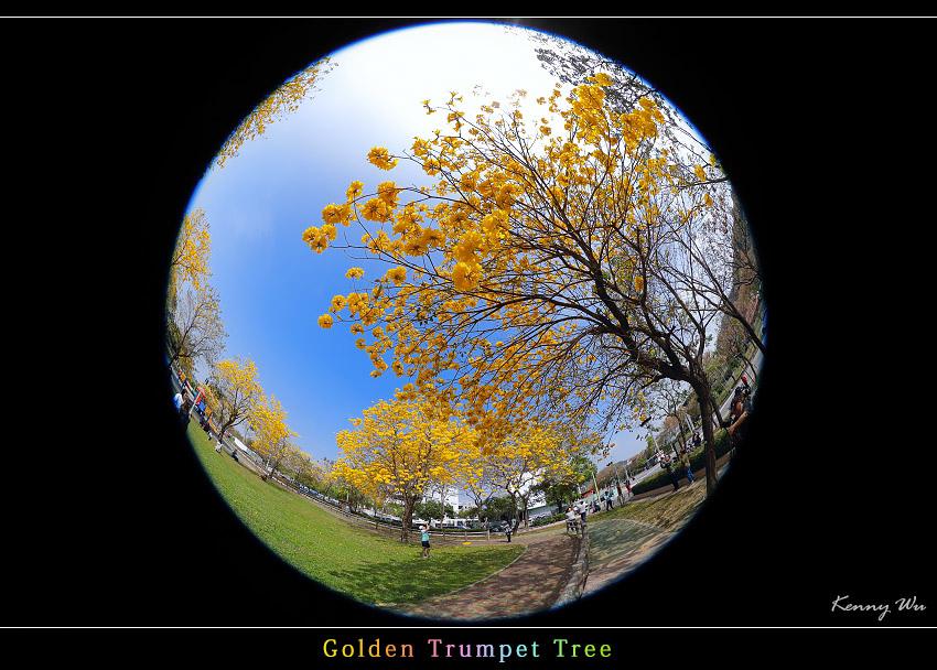 goldtr56.jpg