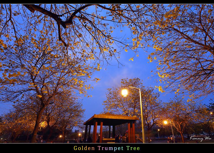 goldtr58.jpg