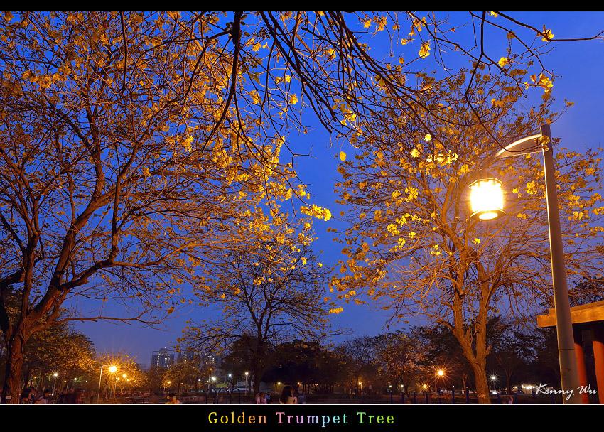 goldtr59.jpg