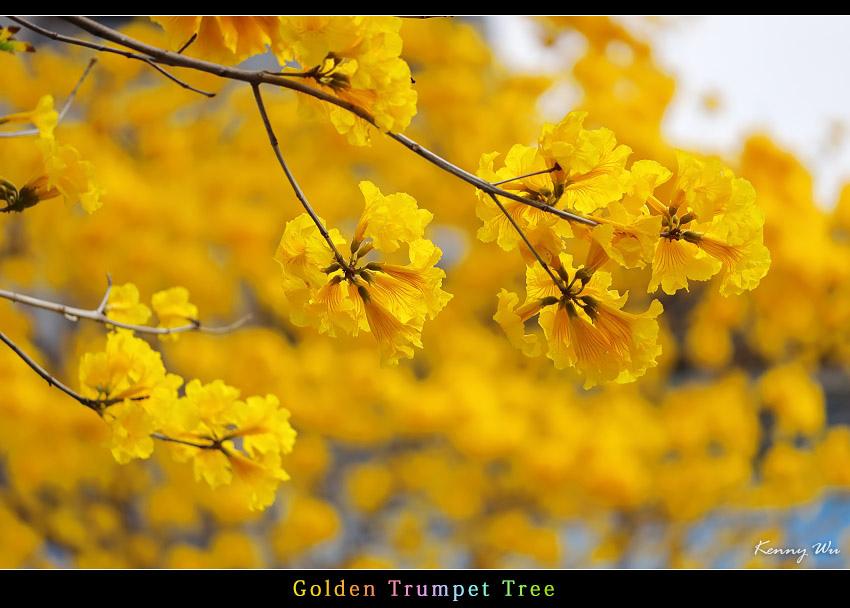 goldtr07.jpg