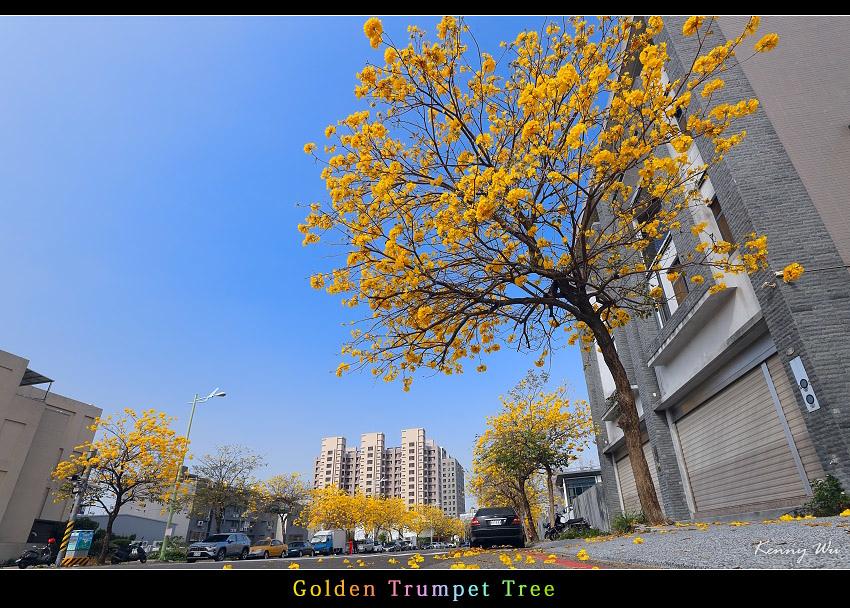 goldtr11.jpg
