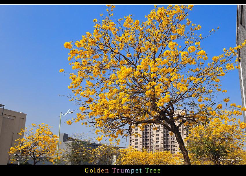 goldtr12.jpg