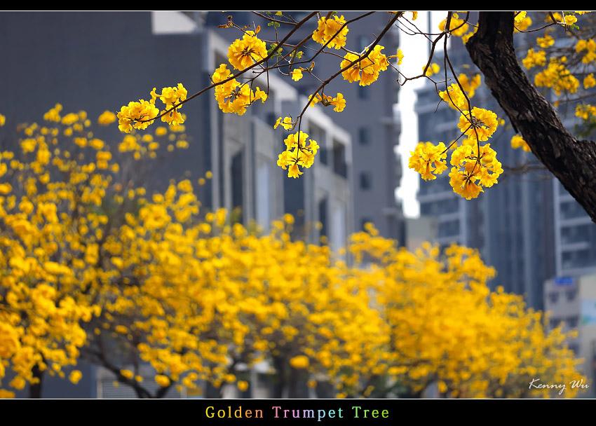 goldtr04.jpg