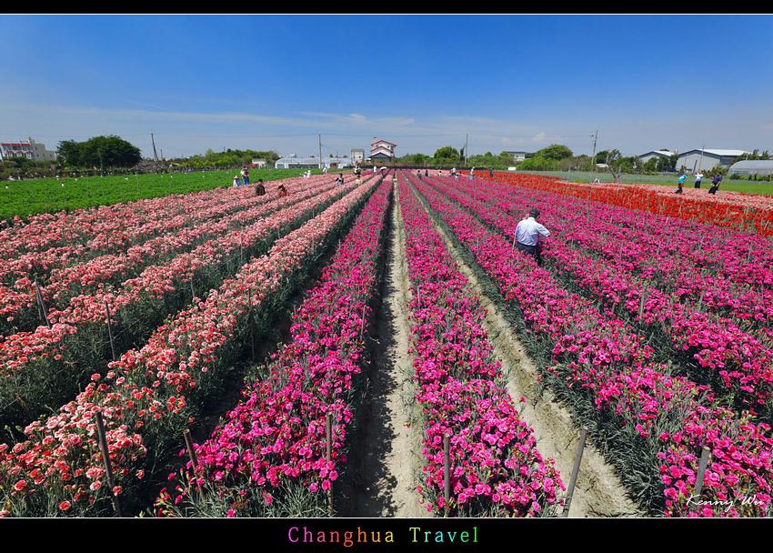carnation02.jpg