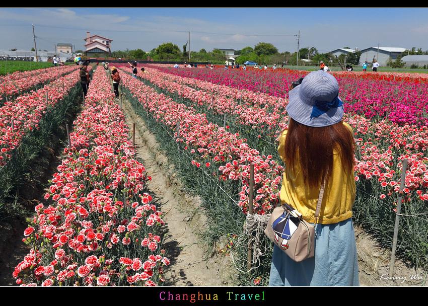 carnation11.jpg