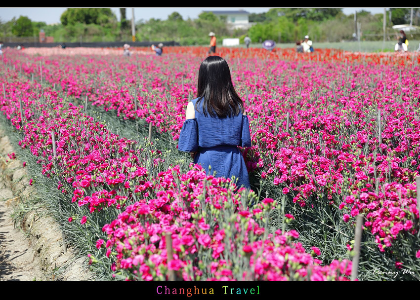 carnation12.jpg
