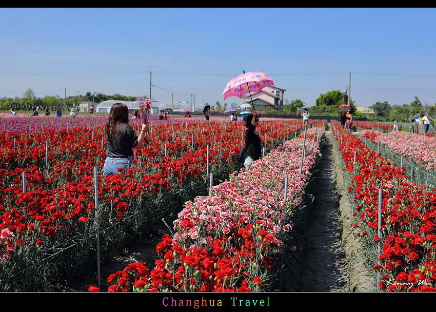 carnation10.jpg