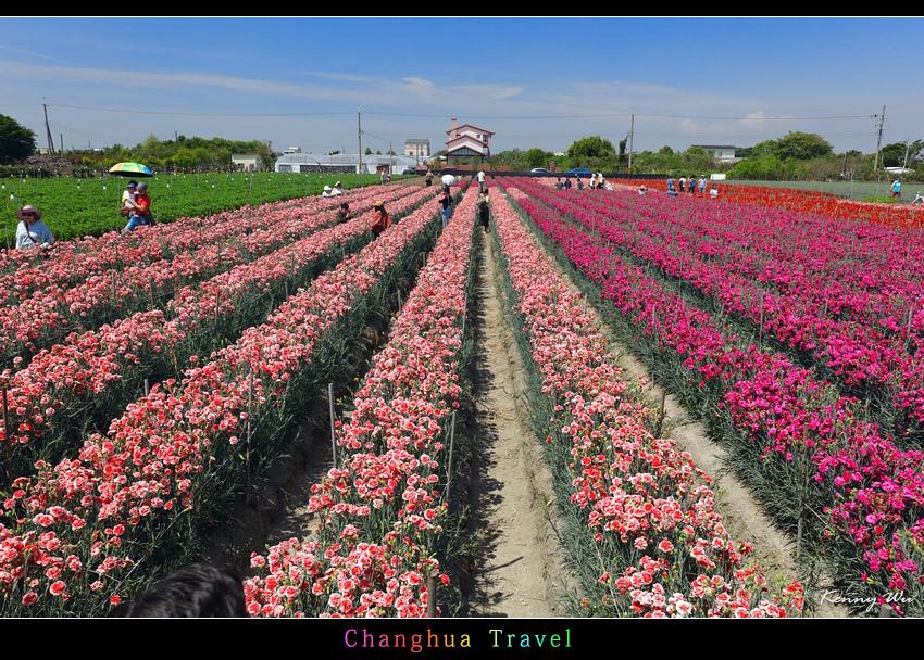 carnation08.jpg