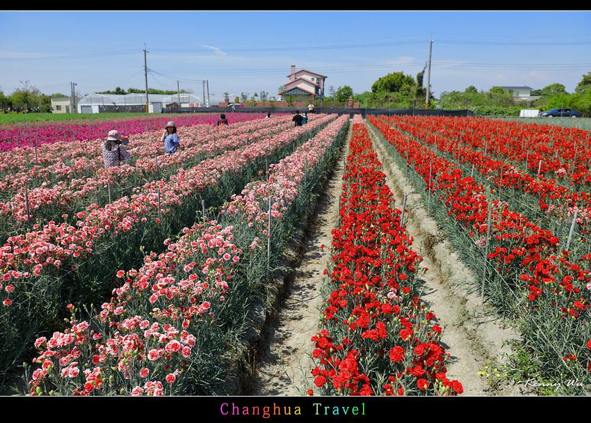 carnation20.jpg