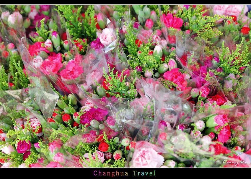 carnation27.jpg