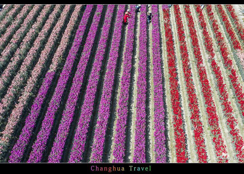 carnation32.jpg