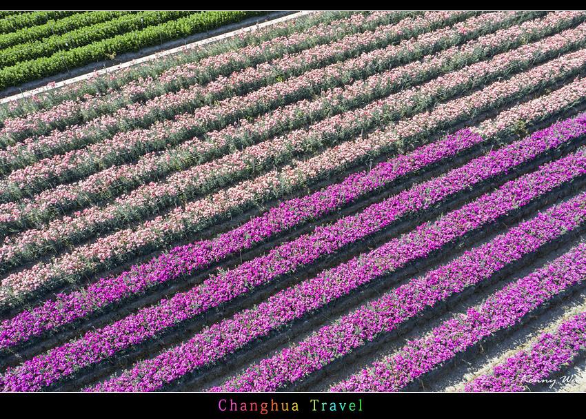 carnation34.jpg