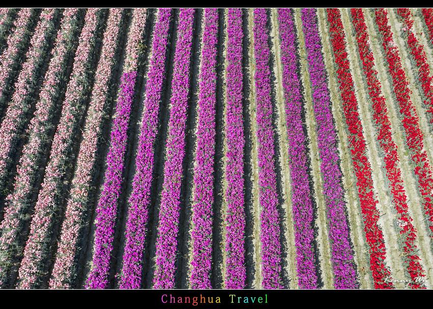 carnation37.jpg
