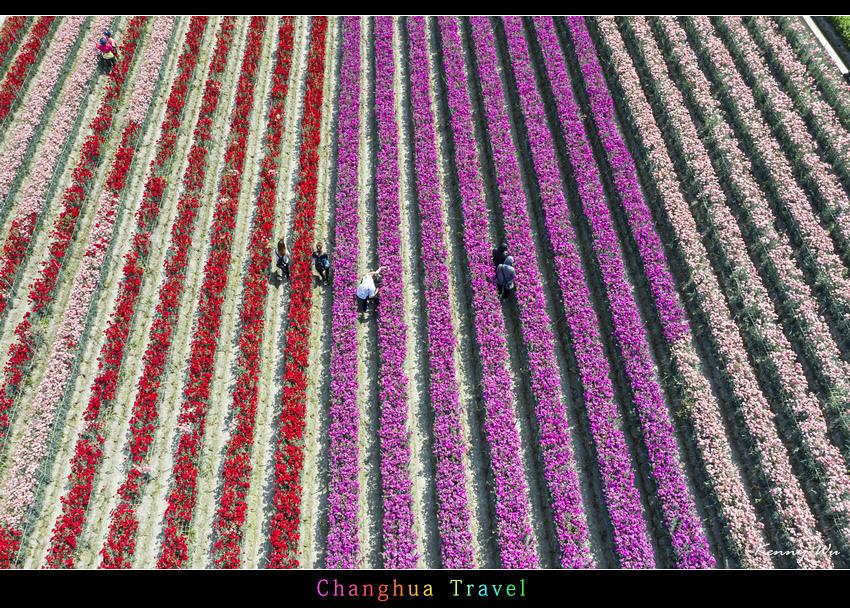 carnation45.jpg