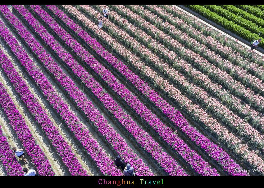 carnation47.jpg