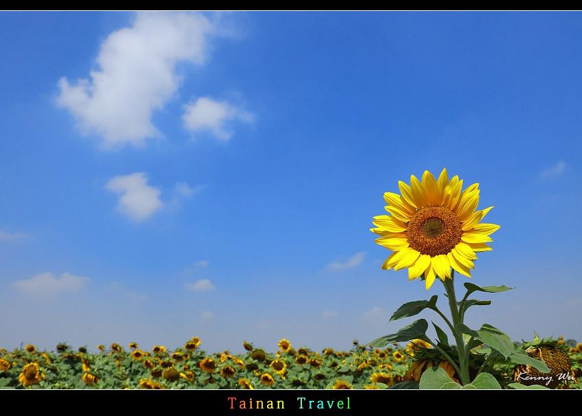 tain-sf09.jpg