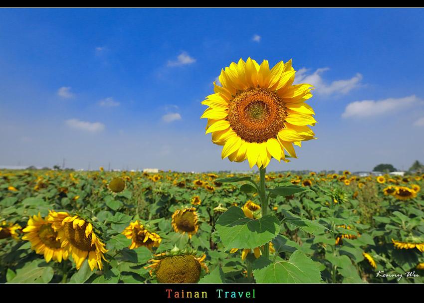 tain-sf12.jpg