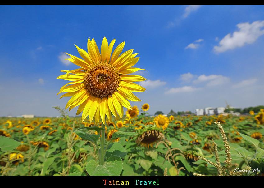 tain-sf13.jpg