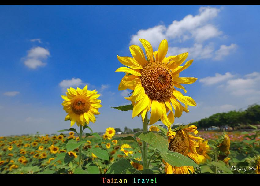 tain-sf10.jpg