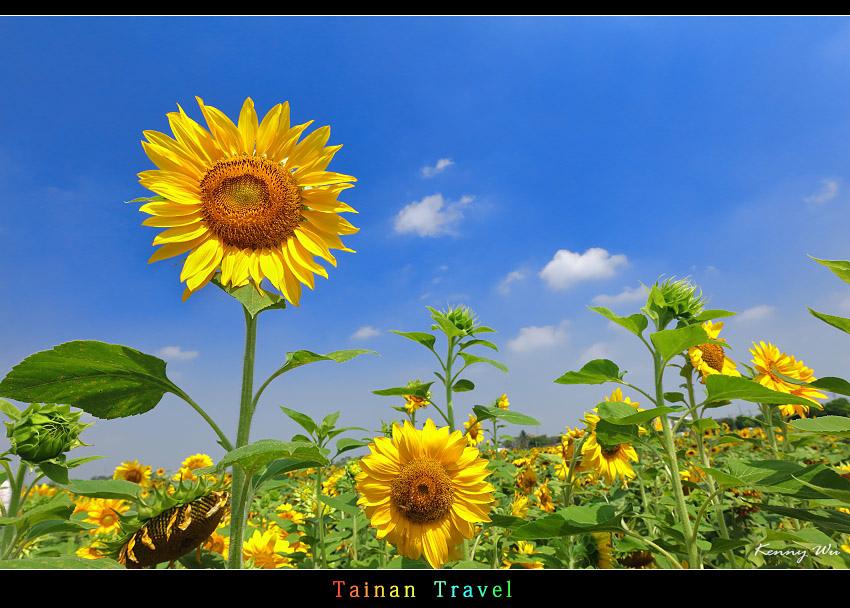 tain-sf19.jpg