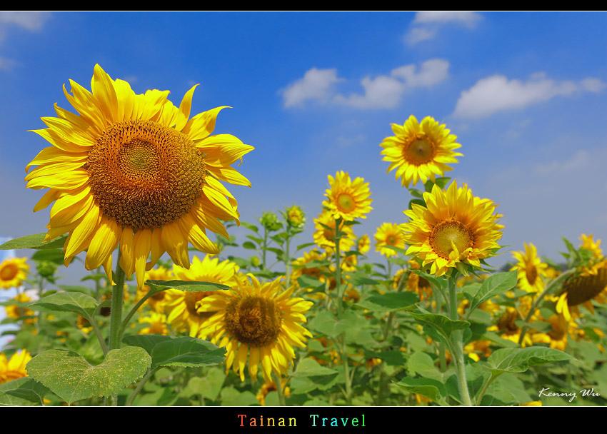 tain-sf18.jpg