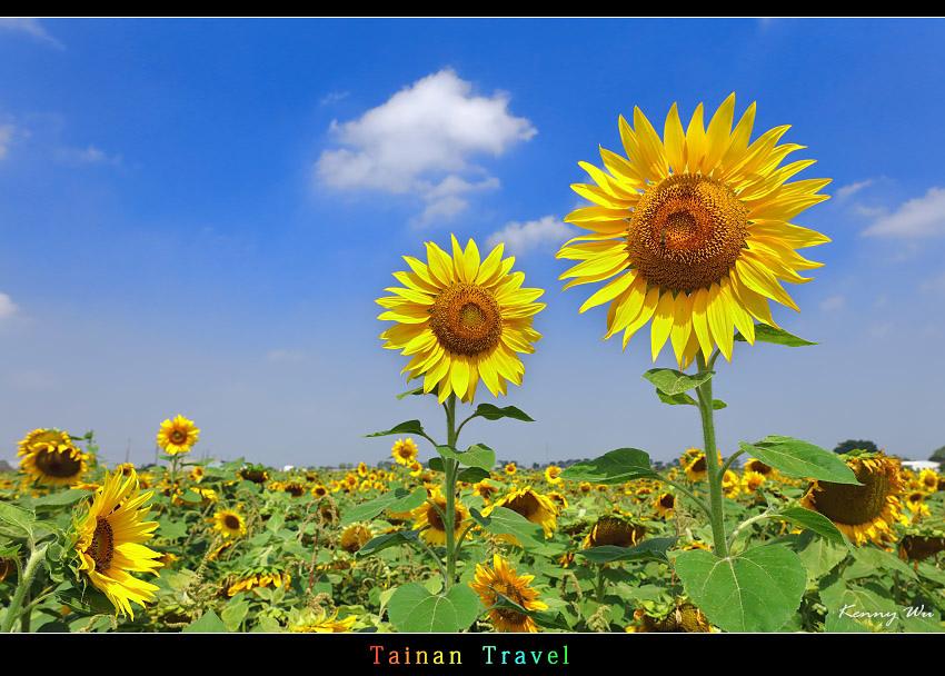 tain-sf17.jpg