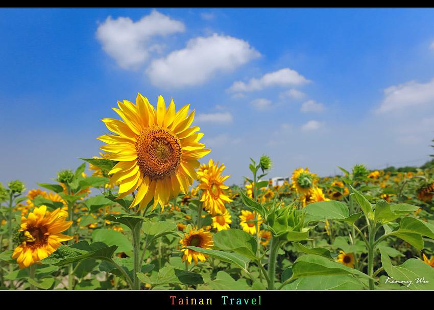 tain-sf21.jpg
