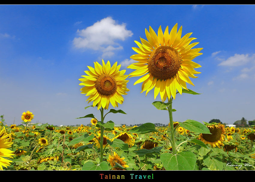 tain-sf02.jpg