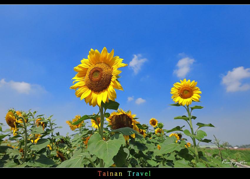 tain-sf03.jpg