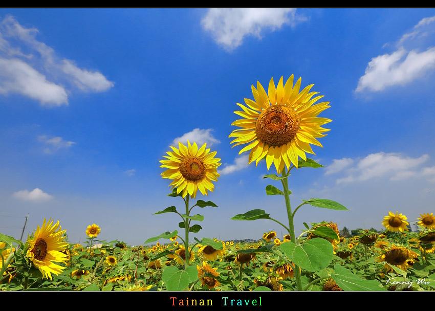 tain-sf01.jpg