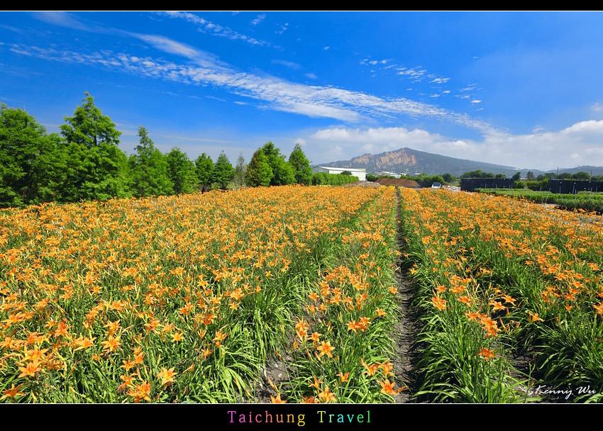 flowerjs24.jpg