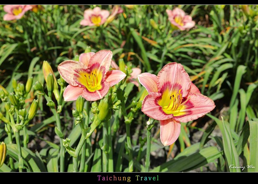 flowerjs26.jpg