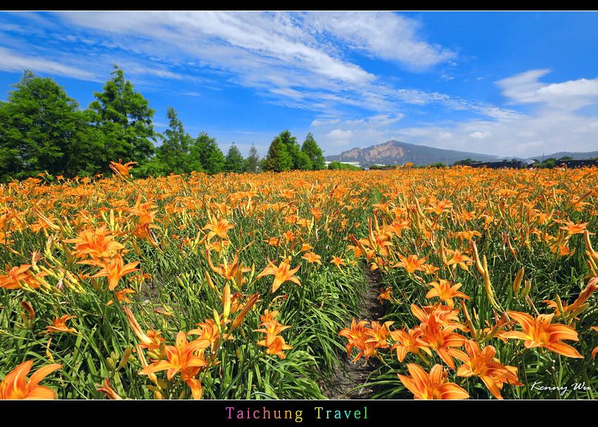 flowerjs31.jpg