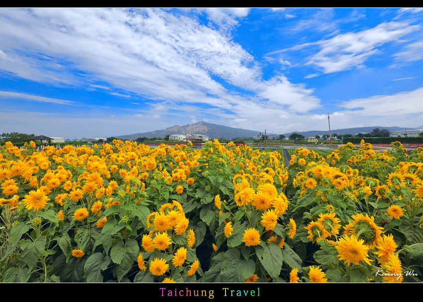 flowerjs37.jpg