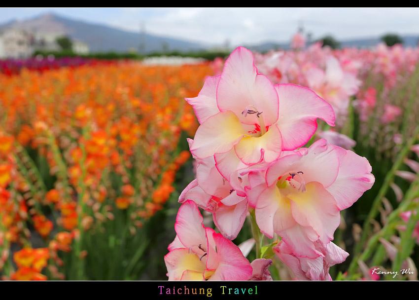 flowerjs41.jpg
