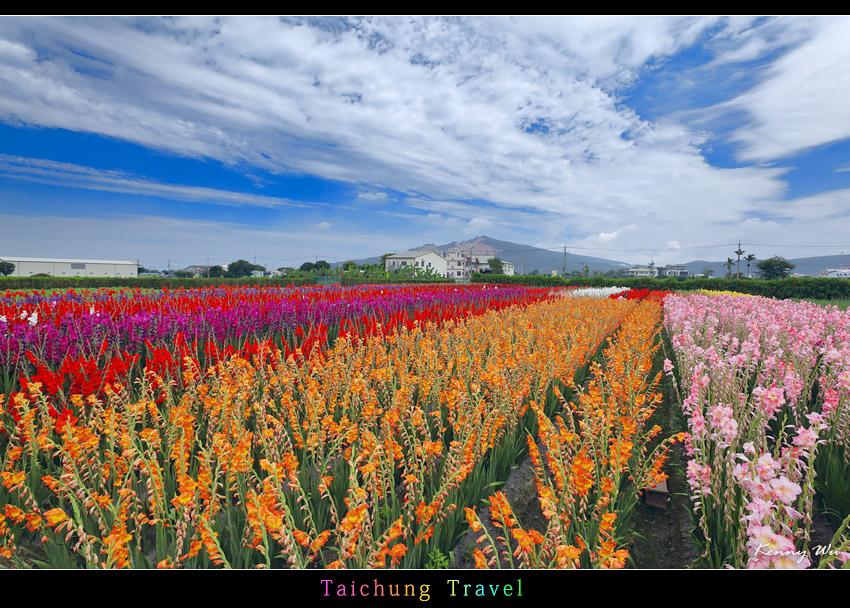 flowerjs43.jpg