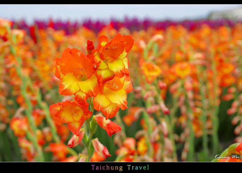 flowerjs42.jpg