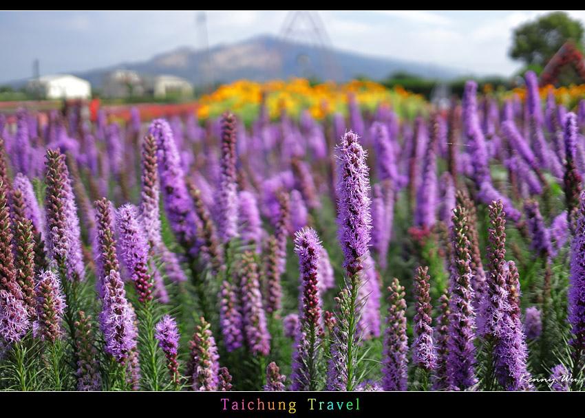 flowerjs49.jpg