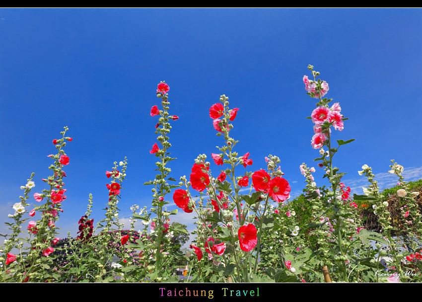 flowerjs06.jpg