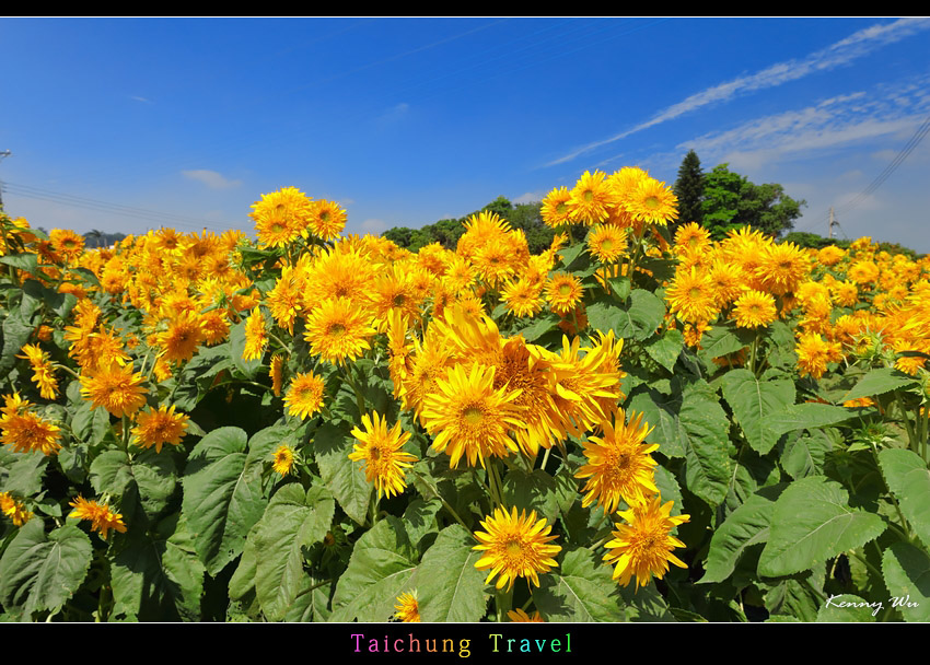 flowerjs11.jpg