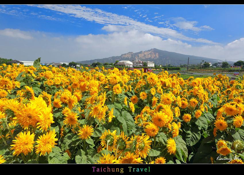 flowerjs14.jpg