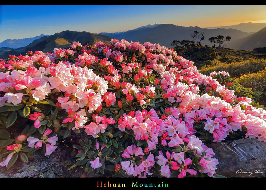 hehuea36.jpg