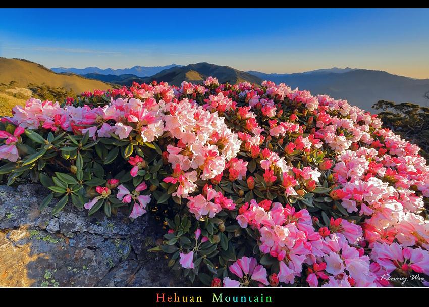 hehuea38.jpg