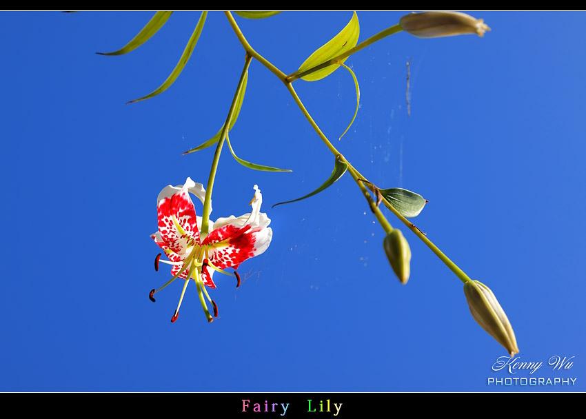 fairyli23.jpg
