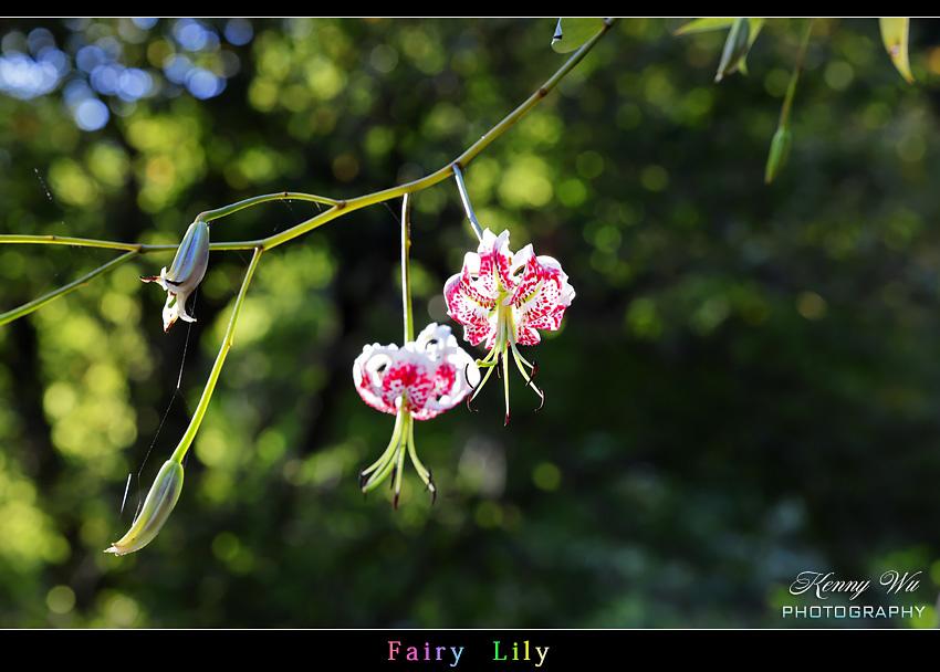 fairyli04.jpg